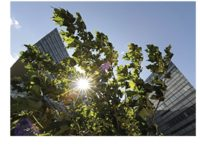 CA City to Save $8.6M over 15 Years with Siemens ESPC