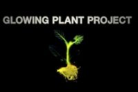 Glow in the Dark Plants for Sustainable Lighting