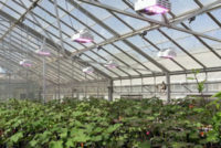 LumiGrow Offers LEDs for Horticultural Uses with No Upfront Investment