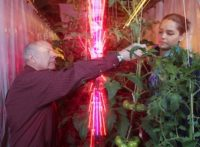 LEDs Reduce Tomato Growing Energy Costs